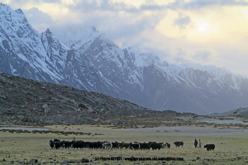 Yaks à l alpage de Bitanmal