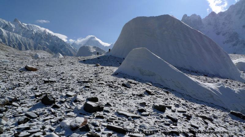 Iceberg, comme des dos de baleines blanches
