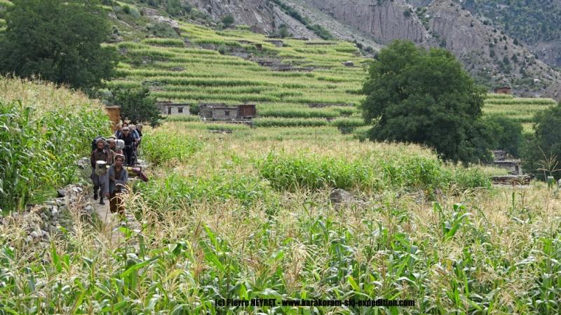Dans les champs de maïs du village de Ser