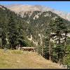 Alpage dans les montagnes kalashs