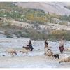 Vallee de Yakhun. Retour des troupeaux en soiree.
