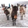 Premieres mules sur Biafo !