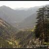 Foret de cedres des montagnes kalashs