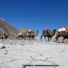 Le désert de la Shaksgam