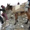 Bataille avec une mule du Baltoro