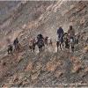 Des cavaliers viennent chercher nos affaires laissees sur le glacier