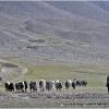 12 mai, matin sur le Boroghil, au hameau de Lashkargaz