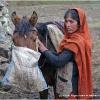 Jeune femme wakhi a Chikar
