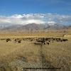 Sur les hauts plateaux kirghizes