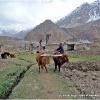 Labours sans tracteur a Yakhun Lasht