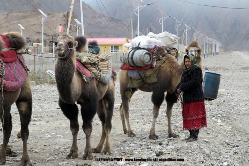 Les chameaux au depart du trek, à Yilik