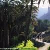 Oman 26