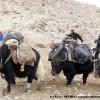 Nos skis et pulkas nous rejoignent à dos de yaks au col de Shimshal