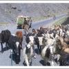 Sur la route de l Hindou Kouch