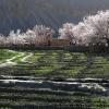 Shimshal au printemps