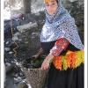 Vendanges a Rumbur - Vallee Kalash