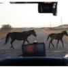 En route pour Tash Rabat