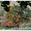 L automne dans le Gojal